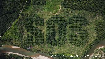 Indonesien SOS geschnitzt in Palmölplantage