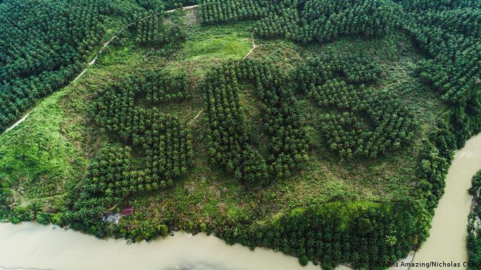 Indonesien SOS geschnitzt in Palmölplantage (All Is Amazing/Nicholas Chin)