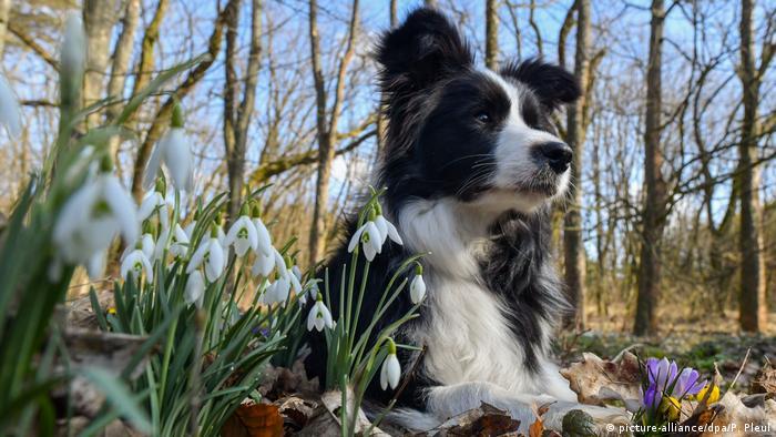 Весна в лесу под Берлином