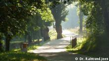 Camino de Santiago | Pilgern auf dem Jakobsweg