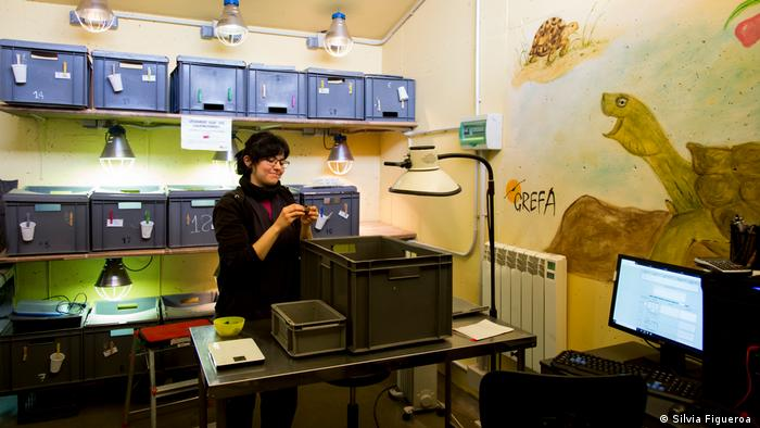 GREFA's wildlife hospital in Madrid (Silvia Figueroa )