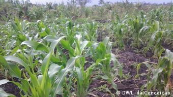 Mosambik Landwirtschaft in Inhambane (DW/L. da Conceicao)