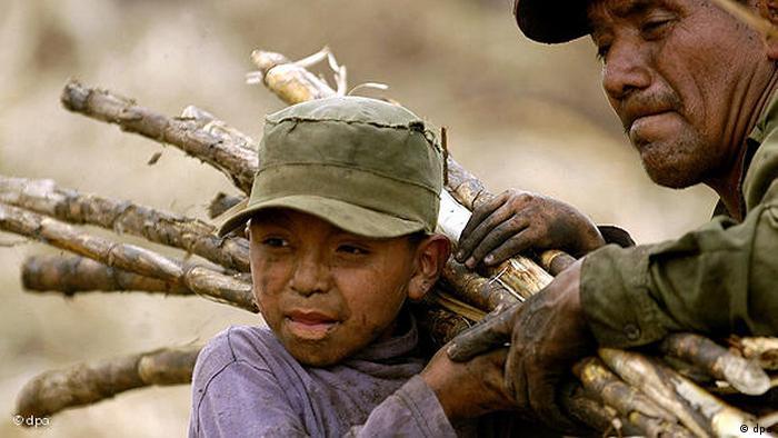 Welttag gegen Kinderarbeit - Zuckerrohrernte in Guatemala Flash-Galerie (dpa)