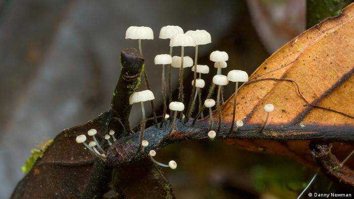 Fungi (photo: Danny Newman)