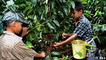 Welttag gegen Kinderarbeit - Kaffeeanbau in Kolumbien Flash-Galerie