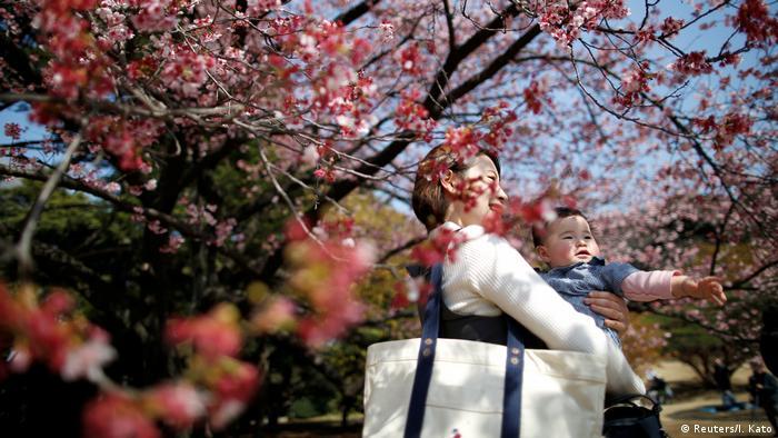 Cherry blossoms in Shinjuku Gyoen National Garden in Tokyo