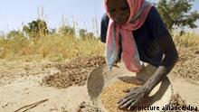 ARCHIV - Eine sudanesische Bäuerin reinigt ausgedroschene Sorgum-Körner (eine Hirseart) nahe der Stadt bei Mukjar auf einem Feld in West-Darfur im Sudan (Archivfoto vom 10.12.2007). Die weltweite Lebensmittelkrise ist nicht nur eine Herausforderung, sondern auch eine Chance. So sieht es Akin Adesina, Vizepräsident der Allianz für eine Grüne Revolution in Afrika (AGRA). «Mittel- und langfristig ist nur der Ausbau der Landwirtschaft, nicht Lebensmittelhilfe die Lösung», betont der Nigerianer. Es sei ein Unding, dass die landwirtschaftliche Produktion in Afrika in den vergangenen 30 Jahren zurückgegangen sei und viele afrikanische Bauern nicht einmal genügend Lebensmittel für den Unterhalt der eigenen Familie produzierten. Foto: Peter Steffen (zu dpa-Korr. Preiskrise als Chance für eine «grüne Revolution» in Afrika vom 03.06.2008) +++(c) dpa - Bildfunk+++