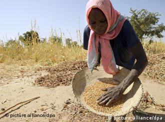 A poor farmer sifts grain in Nigeria