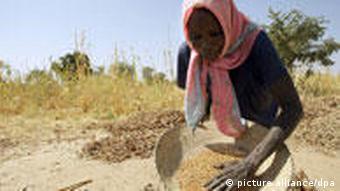 Sudanese farmer with basket of sorghum