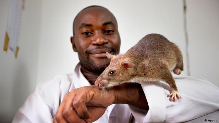 niffer rats tackle transnational wildlife trade