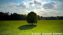 Baum auf Wiese mit Schatten und Himmel