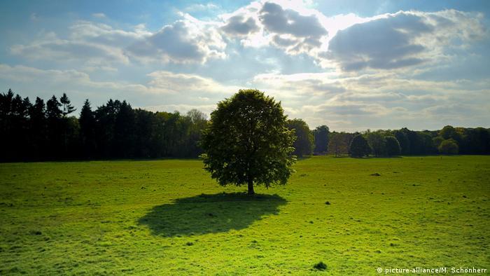 Baum auf Wiese mit Schatten und Himmel (picture-alliance/M. Schönherr)
