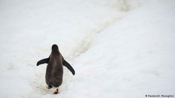 Penguin waddles along ice sheet in Antarctica