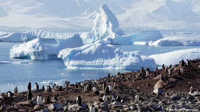 A colony of gentoo penguins on Curverville Island, Antarctica (Reuters/A. Meneghini)