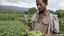 FAO to fight worm in Africa Was zu sehen ist: Farmers hurt by earthworm on their plantations Wann und wo: Africa, 2018 Copyright: Food and Agriculture Organization of the United Nations - FAO