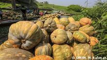 Bangladesch Arial Beel Kürbisanbau