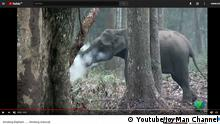 Screenshot Youtube Rauchender Elefant