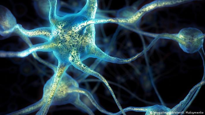 3D Darstellung von Gehirnzellen - Nervenzellen (Imago/imagebroker/O. Maksymenko)
