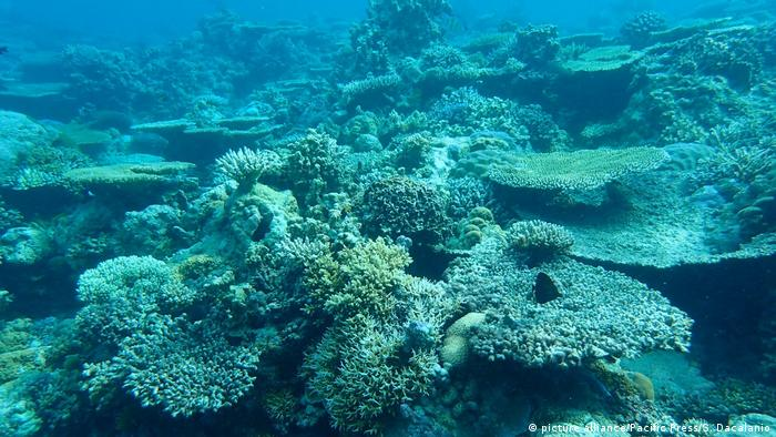Philippinen - Korallenriff