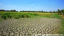 Globale Erwärmung durch den Menschen, Mangel an Regenwasser durch Dürren ht und die Auswirkungen von El Niño lassen die Anbauflächen (hier in Thailand) austrocknen und reißen. Foto: Blanscape/Shutterstock.com