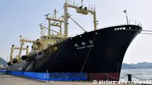 31.03.2018, Japan, ShimonosekiDas japanische Walfangschiff Nisshin Maru ankert am Hafen von Shimonoseki. Ungeachtet internationaler Proteste haben Japans Walfänger in der Antarktis erneut zahlreich Wale getötet. Das Mutterschiff «Nisshin Maru» und zwei weitere Schiffe kehrten am Samstag zurück in den Heimathafen. Foto: -/kyodo/dpa +++(c) dpa - Bildfunk+++ |