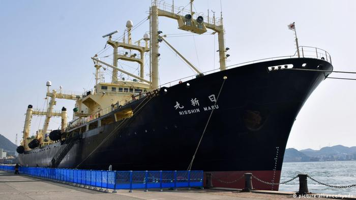 Ship returned from whaling (picture-alliance/kyodo)