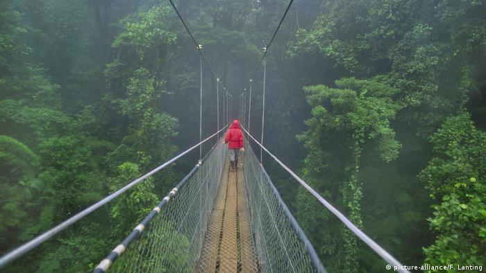 Gefährliche Brücken Hängbrücke im Monteverde Cloud Forest Preserve in Costa Rica (picture-alliance/F. Lanting)