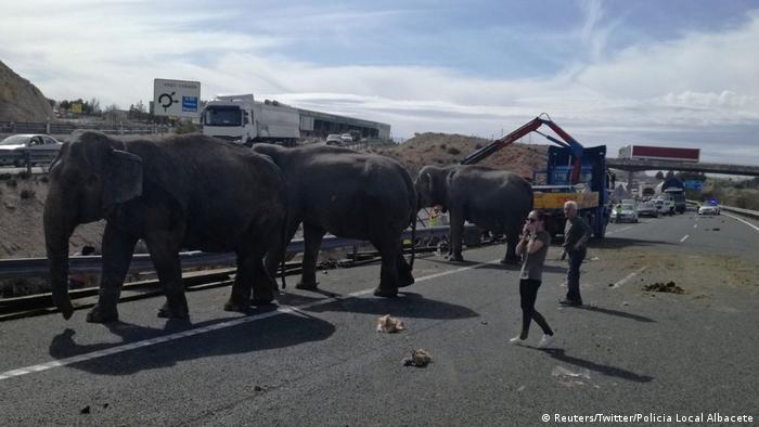 Elephant truck crash in Spain (Reuters/Twitter/Policia Local Albacete)
