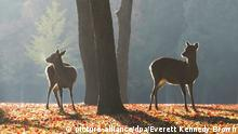 DW eco@africa - Sika deer in Nara, Japan (picture-alliance/dpa/Everett Kennedy Brown)