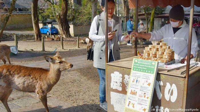 Japan Rehe im Nara-Park (picture-alliance/Maxppp/Kyodo)