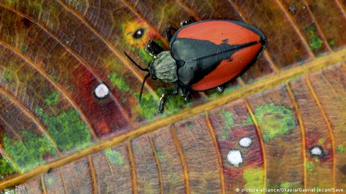 A beetle on a leaf in a rainforest