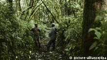 Zentral-Afrika Dschungel