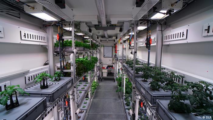 Plants in the DLR greenhouse in Antarctica (DLR)