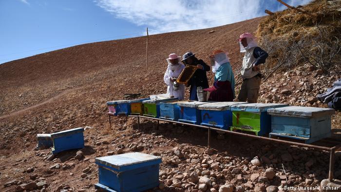 Afghanistan Imker Imkerei Honig Bienen (Getty Images/W. Kohsar)