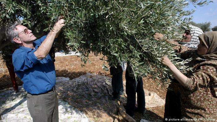 man picks olives with Palestinian villagers