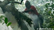 Sundarbans Honey Collection Bildergalerie (DW/M.M. Rahman)