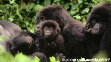 Kongo Virunga Nationalpark
