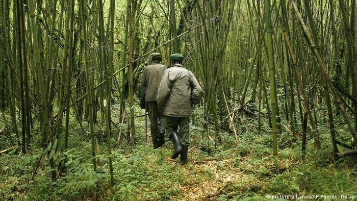 Park rangers make their way through Virunga National Park in Congo (picture-alliance/AP Photo/J. Delay)