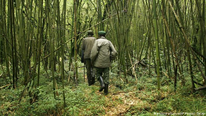 Park rangers make their way through Virunga National Park in Congo (picture-alliance/AP Photo/J. Delay)