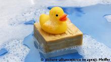 Badeente auf Olivenseife / Oliven-Seife, Gummiente, Spielzeugente, Plastikente, Quietscheente, Spielzeug | Verwendung weltweit