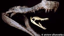 Riesiges Ur-«Krokodil» war lang wie ein Bus und schwer wie ein Wal