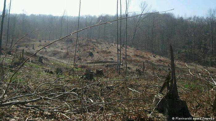 Nestajanje šume