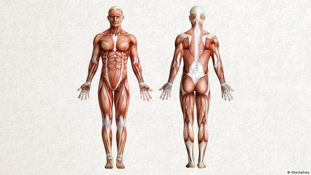 Deutschkurse | Wortschatz | WBS_Foto_Anatomie