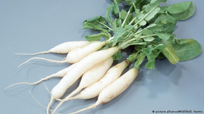 Rettich Gemüse