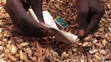 Erdnüsse als Feueranzünder in Gambia