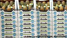 Gestapelt liegen Ananaskisten am Samstag (08.03.2008) in den Regalen des Fruchthofes auf dem Gelände des Großmarktes in Berlin. Das 30.000 qm große Gebäude des Fruchthofes Berlin ist mit 210.000 Tonnen Jahresumschlag einer der größten Handelsplätze in Berlin für hochwertiges, frisches Obst und Gemüse. Foto: Marcel Mettelsiefen dpa/lbn +++(c) dpa - Report+++ | Verwendung weltweit