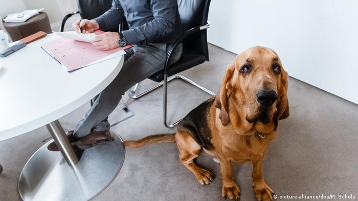 Собака в офисе