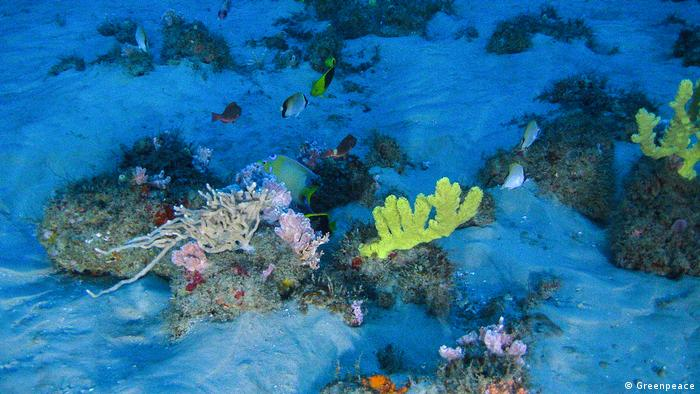 An underwater picture of coral and fish in the Amazon Reef