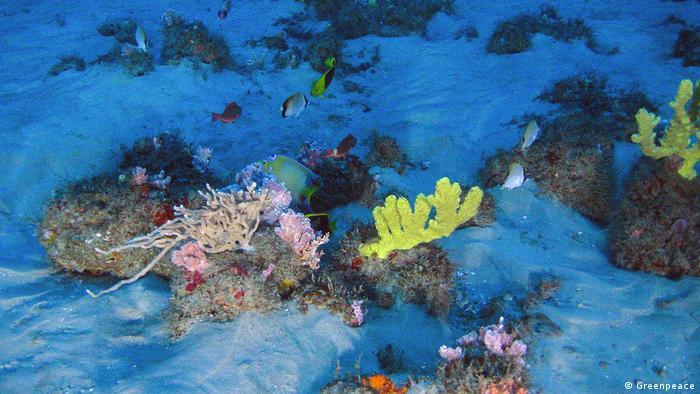 Corais da Amazônia registrados em 2018: imagem submarina feita por robô mostra corais amarelos e esponjas coloridas sobre pedras e areia branca em tons de azul por causa da água; ao fundo, diversos peixes de diferentes cores.