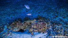 Bildergalerie Amazon Reef 2 Corais da Amazônia